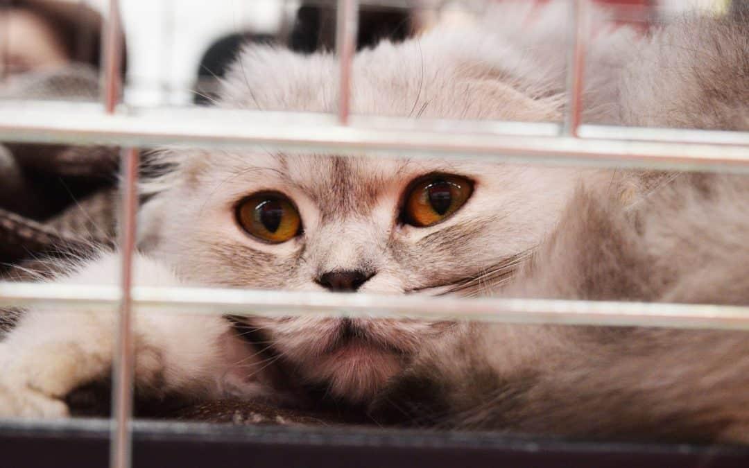 La lutte contre les parasites, pour une meilleure vie chez votre chat
