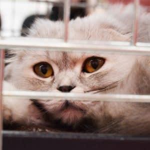 Chat en cage chez le vétérinaire
