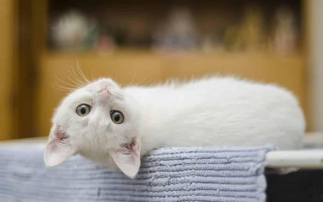 Mon chat ne fait ses besoins dans sa litière, que faire ?
