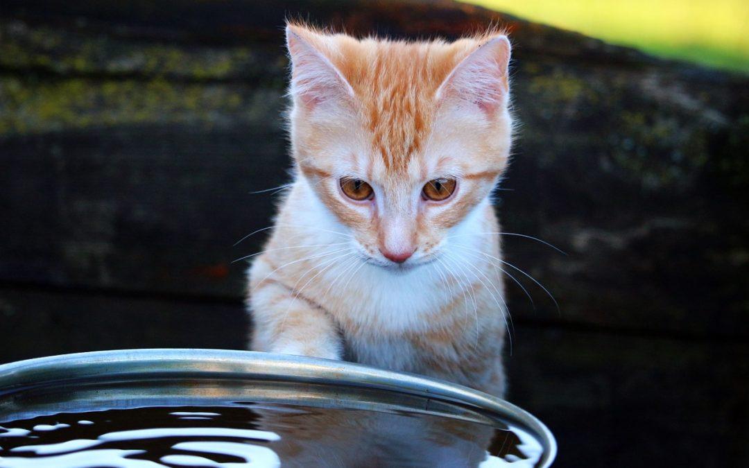 Fini la gamelle d'eau pour le chat, place à la fontaine à eau