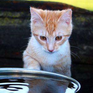 Chaton et eau