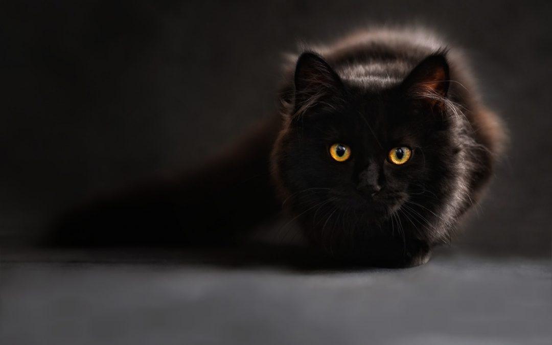 Chatière : Le choix malin pour votre chat et vous
