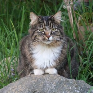 Chat en promenade à l'extérieur