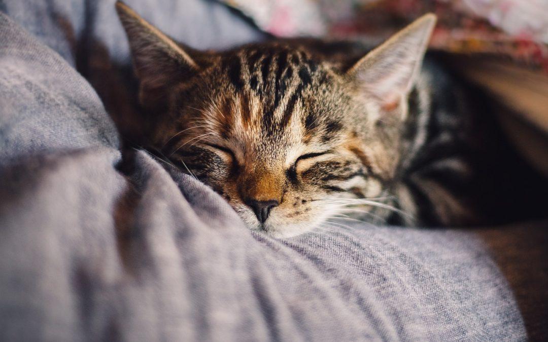 Une mutuelle permet-elle vraiment de mieux prendre soin de la santé de son chat?