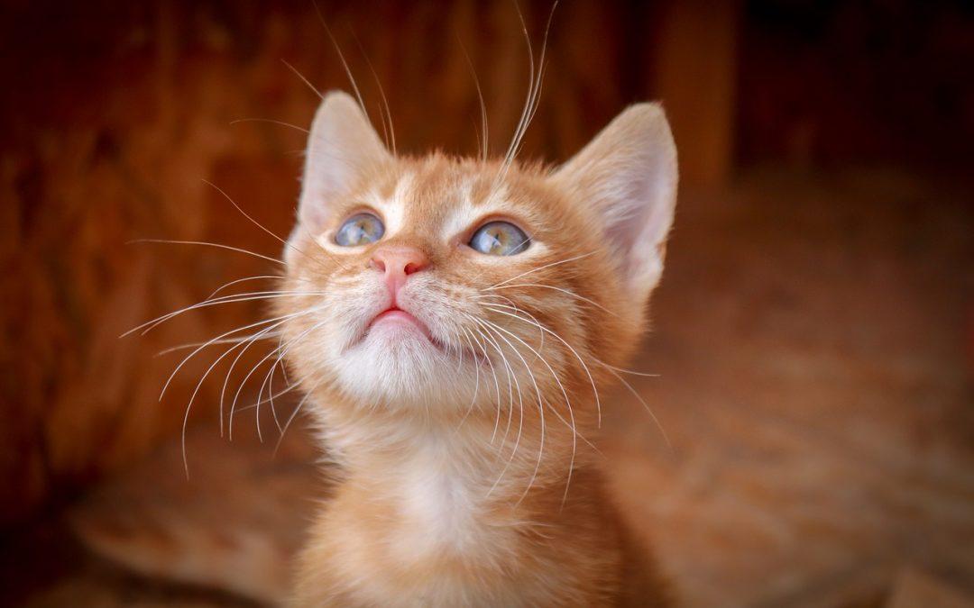 7 signes qui montre que votre chat est vraiment heureux
